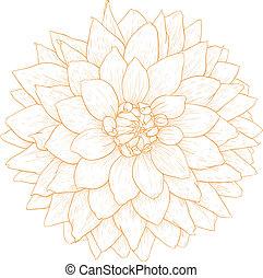 Vector dahlia flower. - Vector dahlia flower isolated on ...
