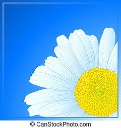 Vector daisy design.