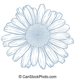 Vector blue daisy in vintage engraving style.