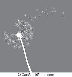 vector dandelion illustration