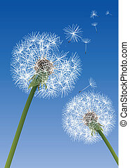 vector dandelions on blue