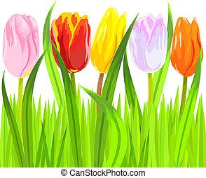 vector, de, colorido, primavera, tulipanes, en, pasto o...