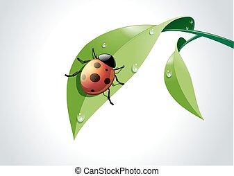 vector, de, mariquita, en, verde, leaf.