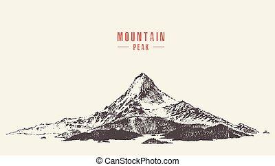 vector, de piek van de berg, pijnboom woud, hand, getrokken