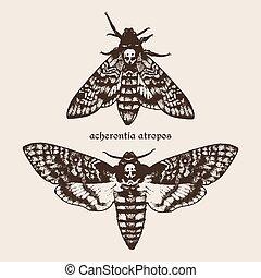Vector Deaths head hawk moths - Vector hand drawn Deaths...