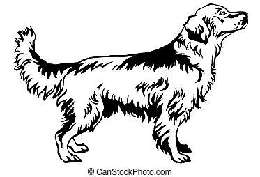 vector, decorativo, retrato, posición, perro cobrador dorado, perro, ilustración