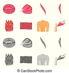 Vector design of fiber and muscular icon. Set of fiber and...