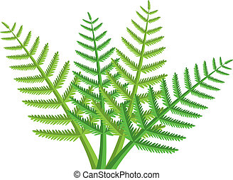 fern leaves - vector design of green fern leaves