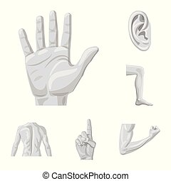 Vector design of human and part symbol. Collection of human and woman vector icon for stock.
