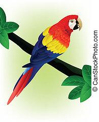 Vector detailed macaw bird