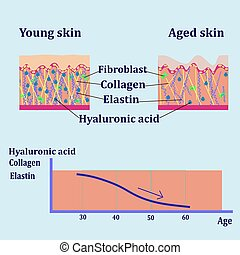 Vector diagram with schemes of two types of skin, for cosmetological illustrations