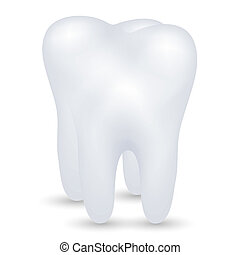 vector, diente