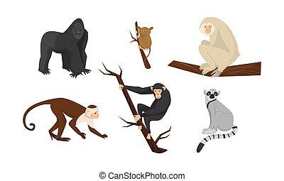 vector, diferente, sentado, monos, especie, ramas, conjunto,...