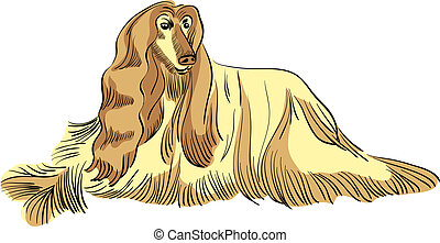 color sketch of the dog Afghan hound breed lying