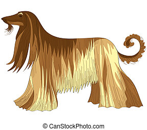 vector dog Afghan hound breed - color sketch of the dog...