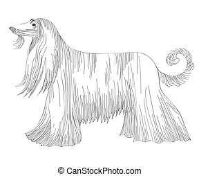 sketch of the dog Afghan hound breed