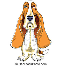 vector dog Basset Hound breed - color sketch of the dog ...