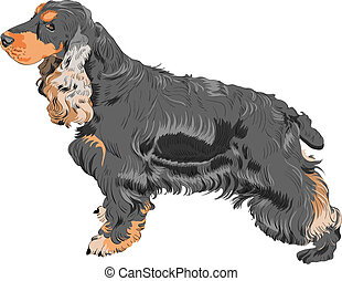 vector dog black English Cocker Spaniel breed - color sketch...