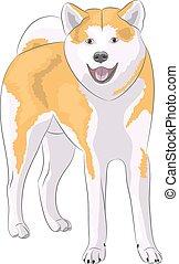 Vector dog breed Akita Inu.