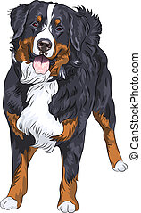 Vector dog breed Bernese mountain dog standing and smiling -...