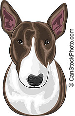 vector dog breed Bull Terrier - vector dog breed bull...