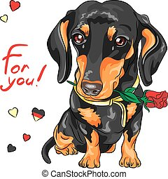 vector dog dachshund with red flower - cute dog breed...