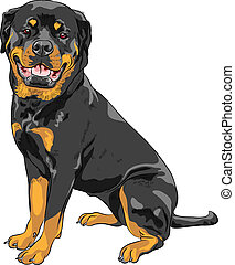 vector dog Rottweiler breed - smiling dog Rottweiler breed...