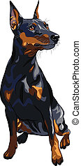 vector dog serious Miniature Pinscher breed sitting - ...