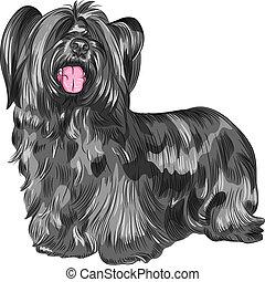 vector dog Skye Terrier breed - Funny shaggy smiling dog...