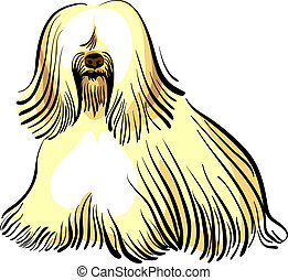 vector dog Tibetan Terrier breed - color sketch of the dog...
