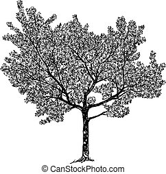 Vector drawing of a flowering cherry tree