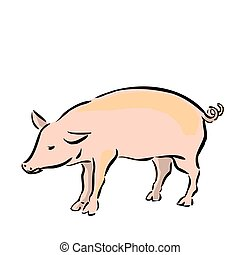 Vector Drawing of a Pig on a White Background