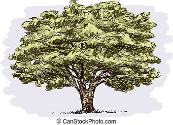 Vector drawing of old oak tree