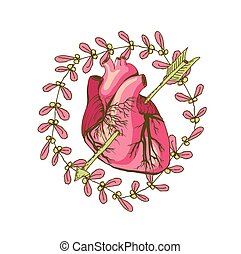 vector drawing of the heart, anatomical