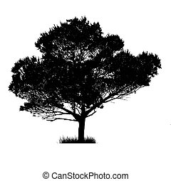 Vector drawing of the tree on white