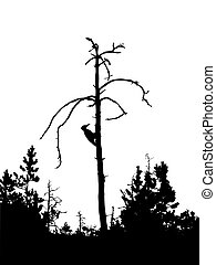 vector drawing - silhouette woodpecker on dry tree isolated...