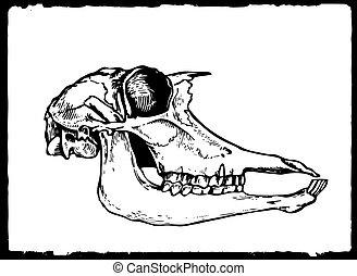 vector drawing skull on white paper