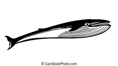 vector drawing whale on white background