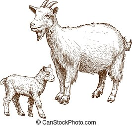 vector engraving goat and kid - vector illustration of ...