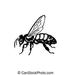 Vector engraving illustration of honey bee on white background