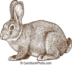 vector engraving rabbit - vector illustration of engraving ...