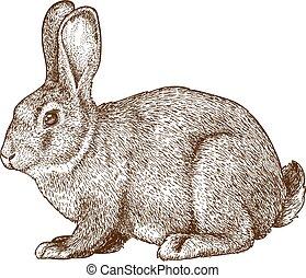 vector illustration of engraving rabbit on white background