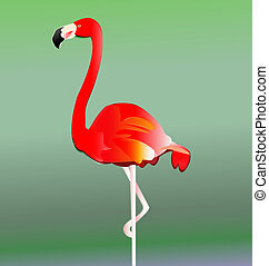 vector, eps10, pájaro, flamenco
