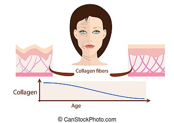 Vector face and two types of skin - aged and young for medical and cosmetological illustrations