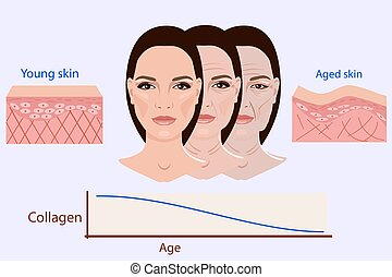 Vector face and two types of skin - aged and young for medical and cosmetological illustrations isolated