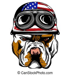 Vector face of bulldog biker with helmet. Motorcycle rider illustration. Shirt graphics. Isolated on white background.