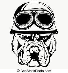 Vector face of bulldog biker with helmet. Motorcycle rider illustration. Shirt graphics.
