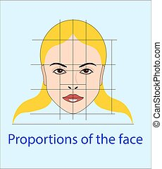 Vector face with lines showing facial proportions for...