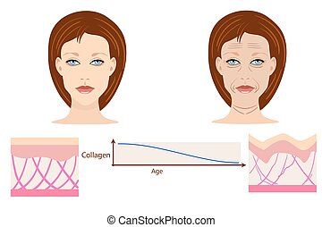 Vector faces and two types of skin - aged and young for medical and cosmetological illustrations