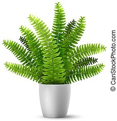vector fern in a pot - Vector realistic fern in a pot. ...